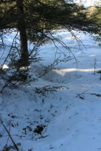 deer beds