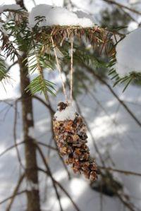 feeding cone