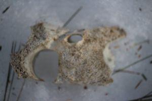 bone mystery