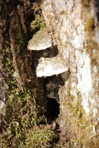 mushrooms and hole