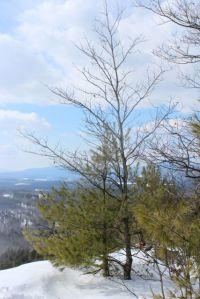 oake and pine