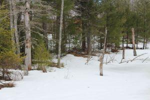2nd beaver lodge