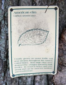 am elm sign