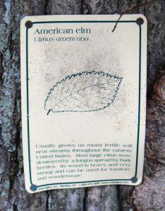 am elm sign