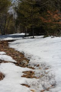 following snowshoe trail