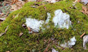 quartz:lichen