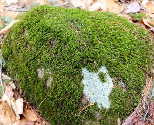rock:lichen