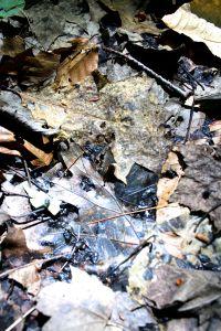 dead tadpoles