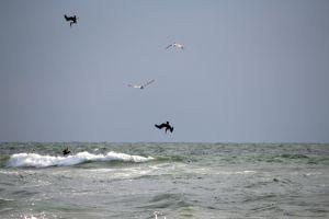 pelican dive 2