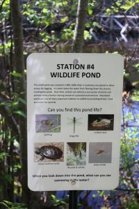 station 4, wildlife pond