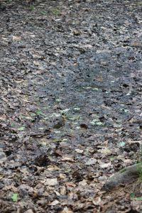 wet spot