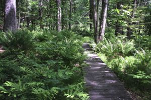 ferns along path 2