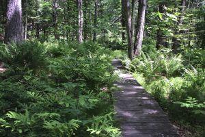ferns along path 2