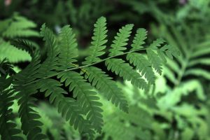 if frond
