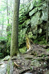 ledges, rocks and roots-layers