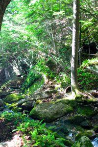 stream layers