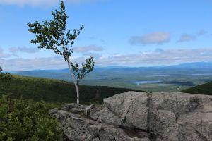 summit view w: tree