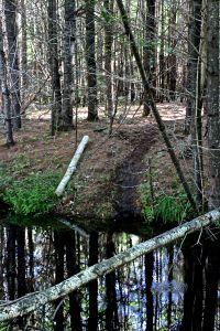 beaver path