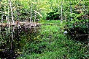 beaver works--walk around