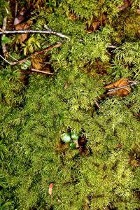 mystery fern mat