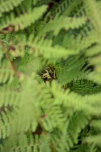 grasshopper in fern