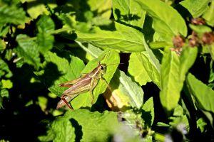 on leaf