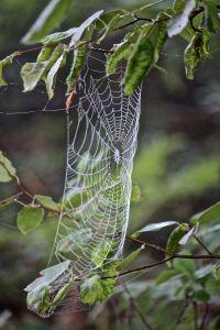 spider works 2