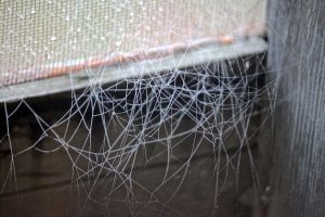spider works