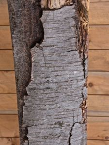 BEam 14, black birch