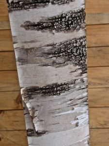 Beam 15, paper birch, white birch