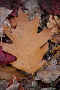 brown leaf on ground