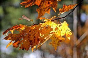 dried leaves on tree