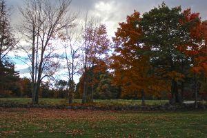 fewer leaves