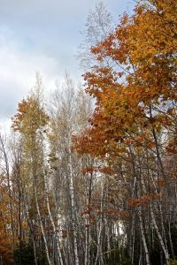 fleeting moments of fall foliage
