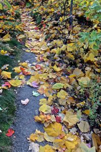 follow the yellow leaved bedrock