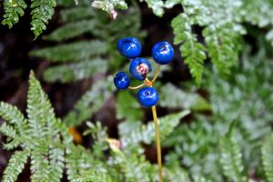 fruits, blue beads