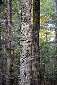 life on a tree 3