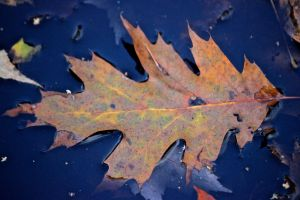 puddle leaf, splotches of color