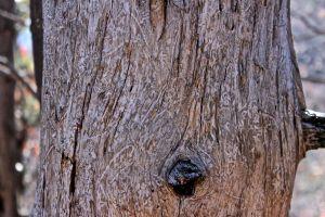 beetle bark tunnels
