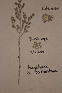 hardhack sketch