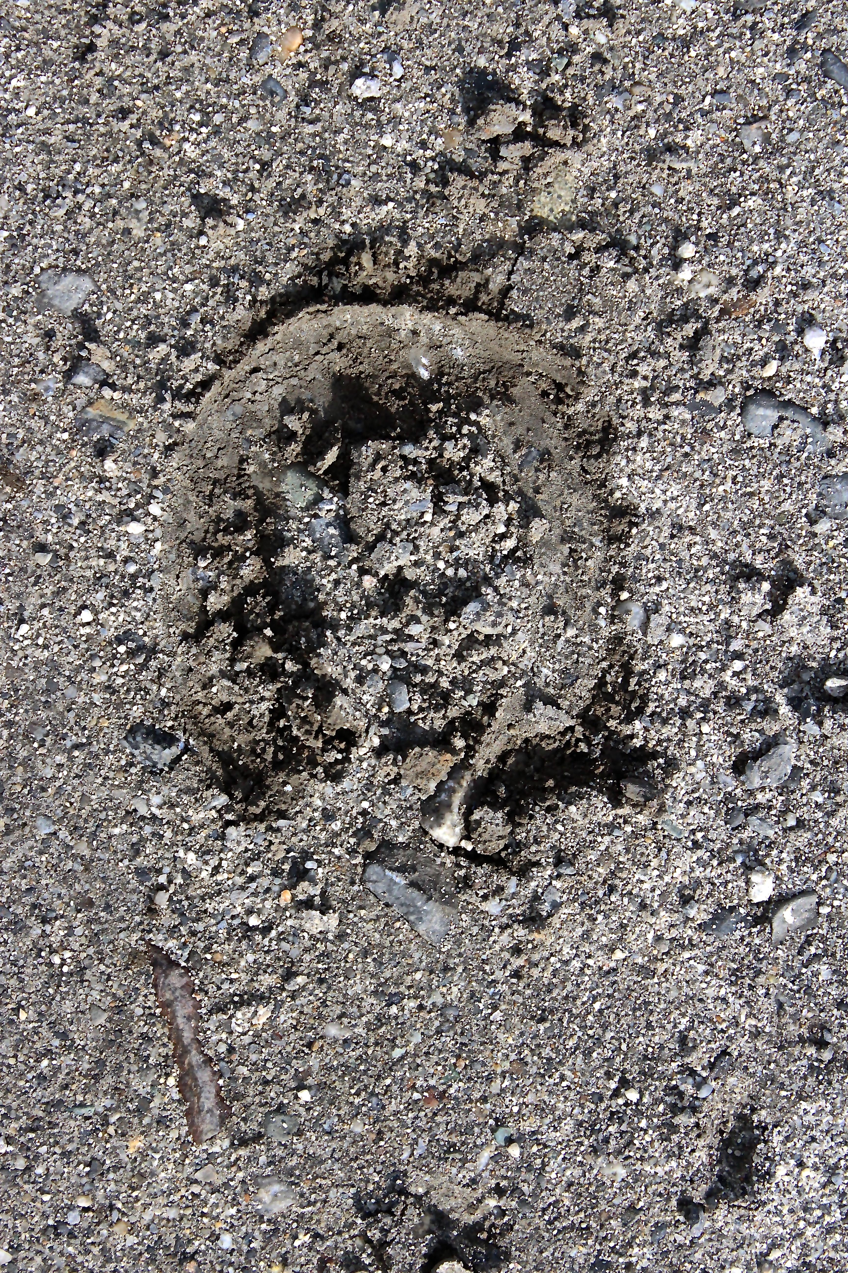horseshoe print