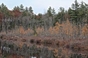 HP beaver lodge, Muddy River