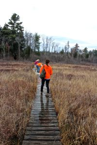 HP bog boardwalk, water