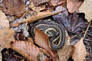 HP snake
