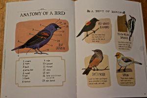 NA- birds