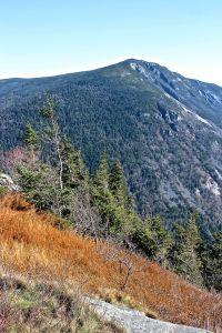 spruce on edge