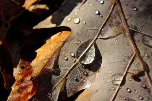 tear-shaped droplet