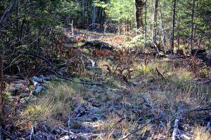 trail boggy