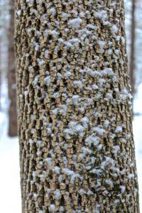 ash cork