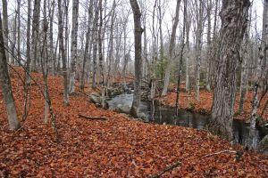 beaver creek 2
